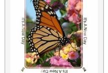 Butterflies / Butterflies, butterfly art, butterfly greeting cards