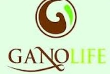 GanoLife information / We offer organic coffee, tea, and health supplements  / by John Sapp