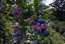 Blueberry Hill, Ohio / by John Sapp
