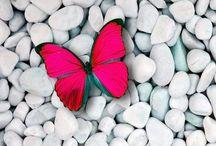 Butterfly / by Byanca Cherubini