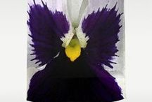 Home Decor Purple and Yellow / Rich purples and vibrant yellows merging together in gorgeous harmony