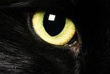 PHOTO ( Cats ) 540 / Cats