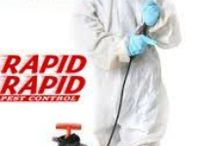 pest control london ontario / For all residential pest control services trusted name Rapid Pest Control