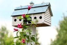 outdoors/garden