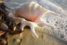 sea shells / by Sherry Rightmer