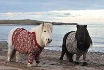 Animals in Sweaters / by Ashley Nebel