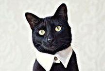 Kitties / by Simone (Tiny-Ass Apartment)
