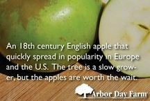 Apple A Day / #appleaday