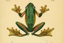 Frog´s spiritual path / Frog is the only animal in the world, with its mere presence indicates that no bio contamination in there