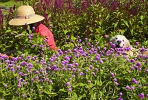 Flower Farming at Laughing Lady / by Laughing Lady Flower Farm