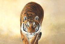 GEAUX LSU Tigers / Geaux Tigers!  LSU Tiger Football