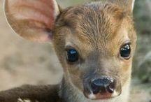 Animais./ Animals <3 / Lindos e perfeitos. / by Letícia Queiroz