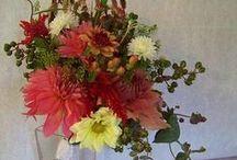 Dahlias / Dahlias / by Laughing Lady Flower Farm