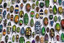 bugs.