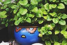 *Home* Garden