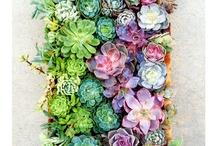 yard, garden, flowers / by Donna Erickson