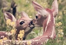 Animals! / by Rachel Feuer