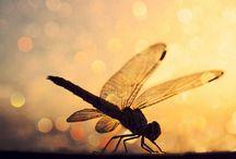 Dragonfly / by Jenny Owen