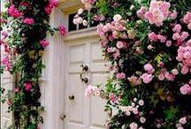 Lovely Flower Vines