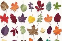 Autumnal Treasures / by Cait Barnett