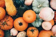 Halloween and Fall / Pumpkins Galore!