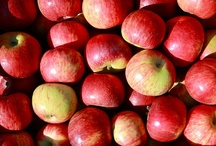 All Things Autumn / How we have fun in the fall time ~ kids activities, yummy recipes, & all things apples!