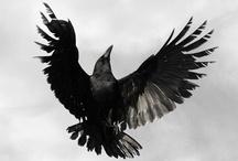 Crows / by Jayne Worth