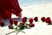 My Love Is A Red Red Rose
