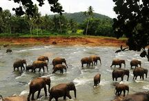 Sri Lanka / by Mloes *