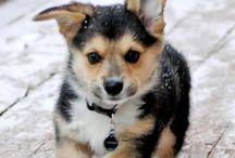 Pets / Animals I love