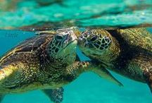 Sea Turtle Obsesession / Sea Turtles / by After My Art