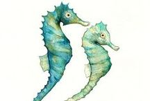 Seahorse Obsession