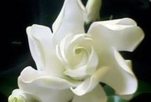 All Things White / by Patti C