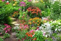 Gardens / by Patti C