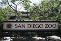 San Diego / by Sybil Leger