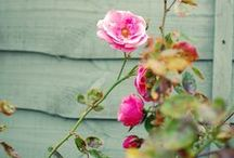 ~Flowers~ /