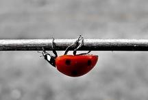 Ladybugs / by Alexandra Rivera