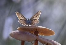 Butterflyes