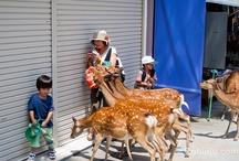 Andanzas 2012 / Presentando mediante fotos las entradas de 2012 / by Robin Jú