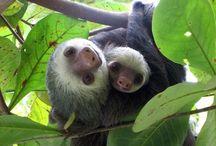 Costa Rica / by Tania Cavenecia Torres