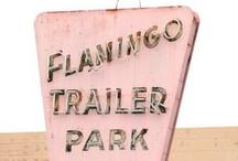 Meus flamingos