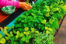 Gardening / by Sarah