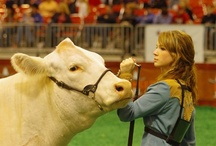 Livestock / by RODEOHOUSTON