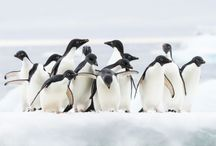 Dancing Animals / Animals love to dance. This board celebrates their amazing dance moves.  / by Animal Muse: Cathy Currea