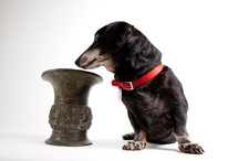 Dachshund Art & Objects / by Jana Caldwell