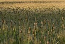 Loudoun Grown / Loudoun farms, produce, farmer's markets, organic and knowledge sharing.