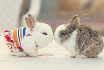Animals beautifull