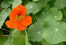 Garden- Herbal Cultivation and Uses