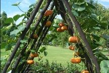 Garden- Arbors/Trellising