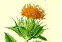 Garden- Dye Plants-Culture/Processing